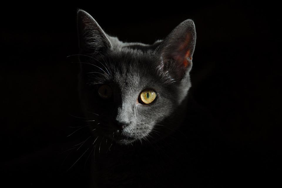 Kot boi się fajerwerków jak mu pomoc