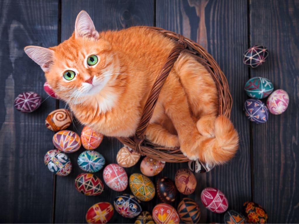 Czy kot może jeść jajka?