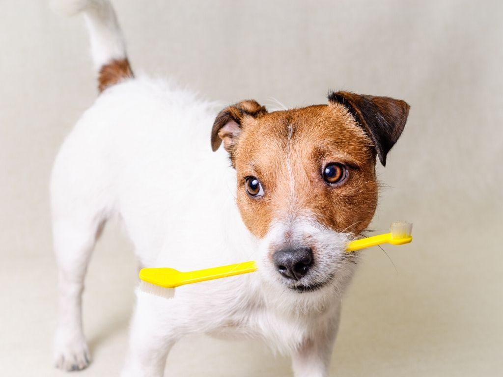Szczoteczka do zębów dla psów