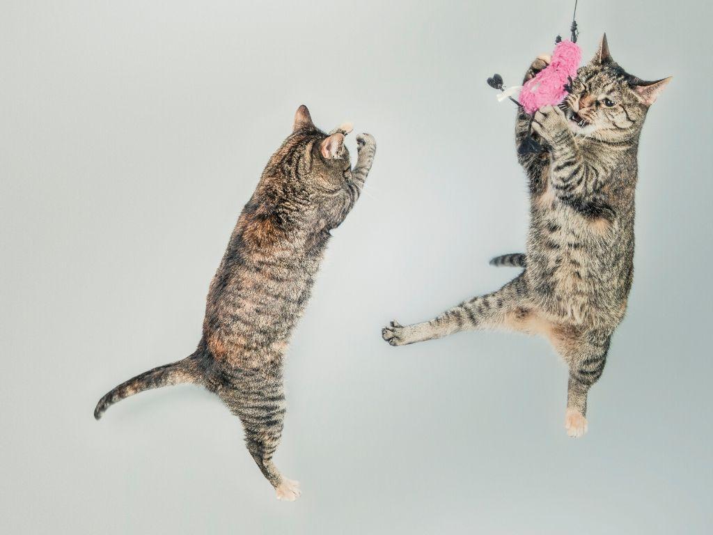Jak wprowadzić kota do nowego domu szybko i bezbolesnie