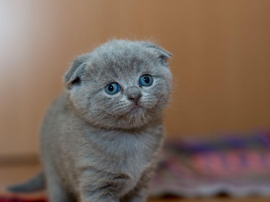 Jak nauczyc kota korzystac z kuwety