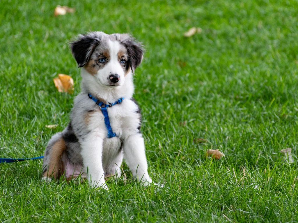Jak nauczyc szczeniaka zalatwiac sie na dworze