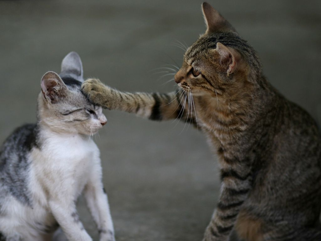 Jak wprowadzić kota do nowego domu gdy mam juz kota