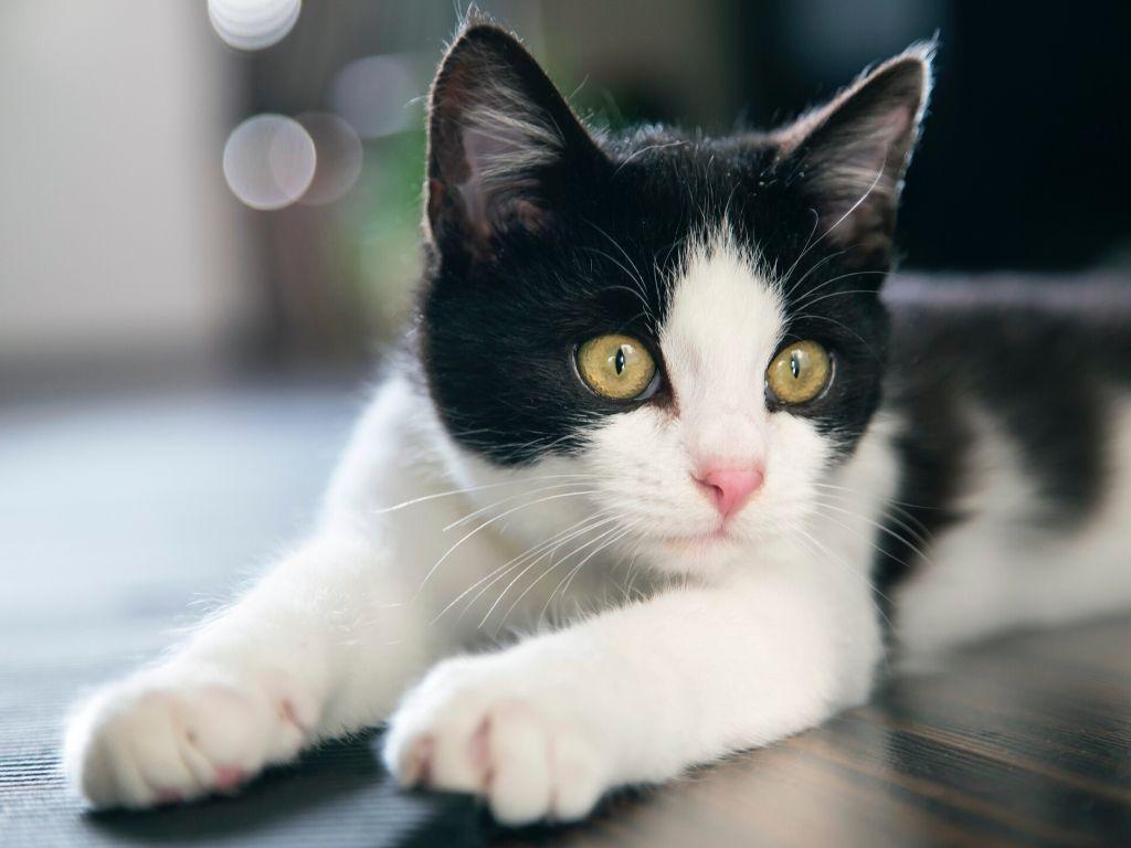Czego nie może zjeść kot?