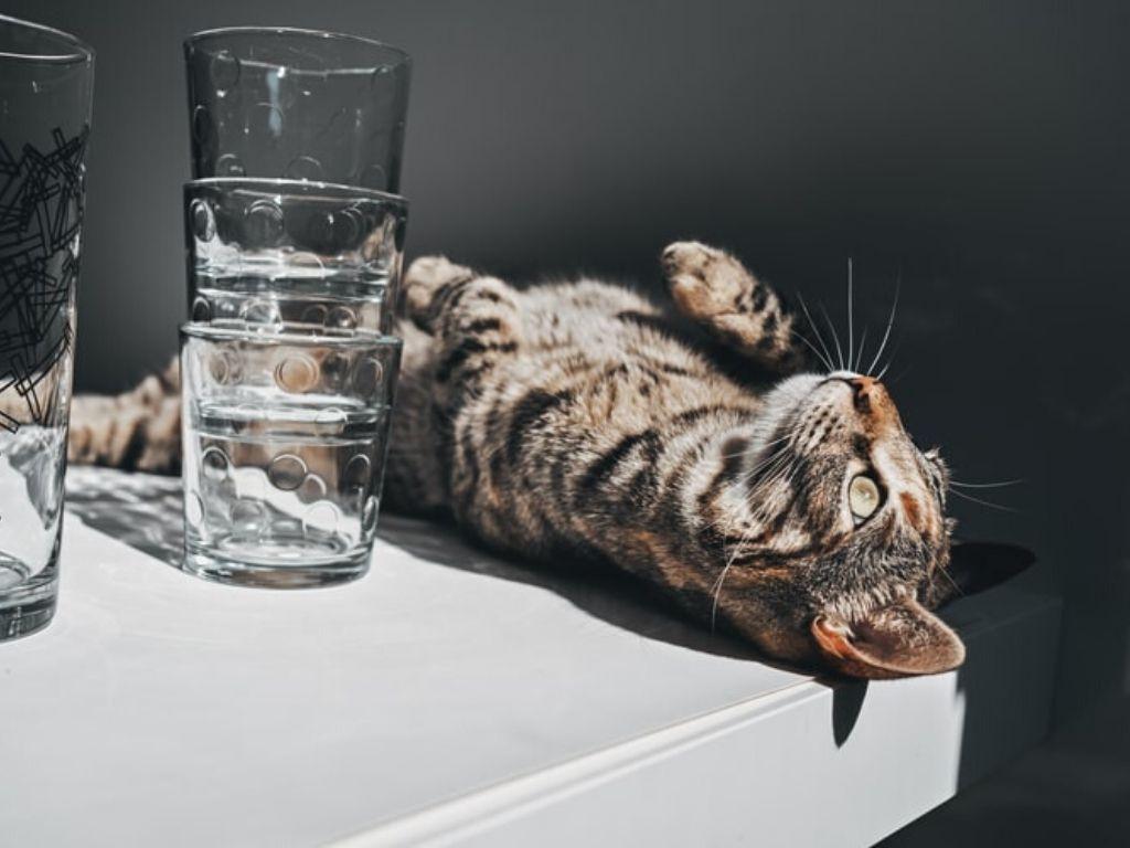 Czy koty piją wodę?