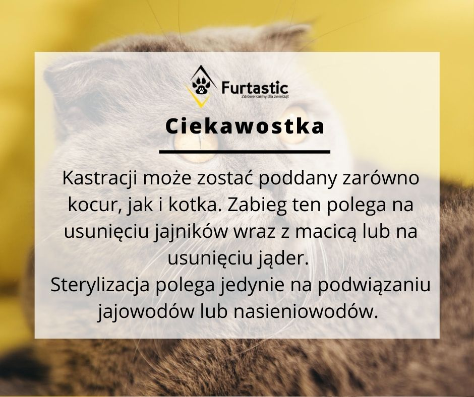Czy kastrować kota?