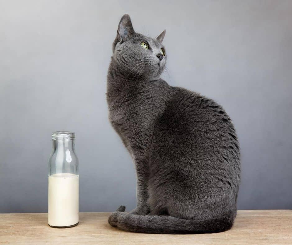 mleko dla kotów dorosłych