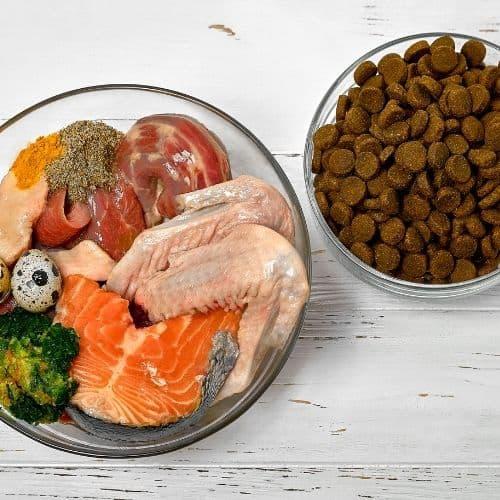 Czy można karmić kota surowym mięsem?