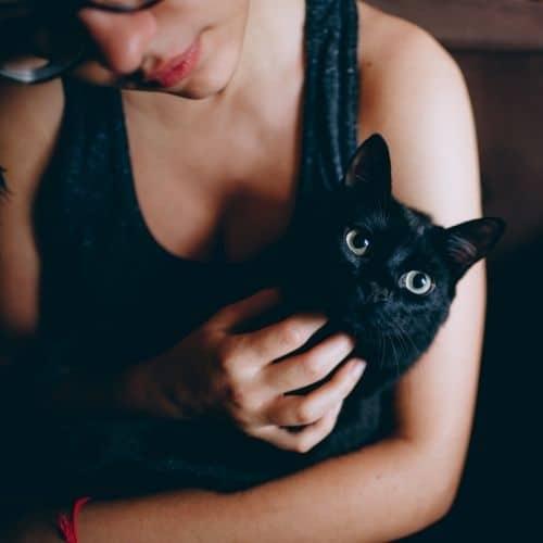 Kot może jeść surowe