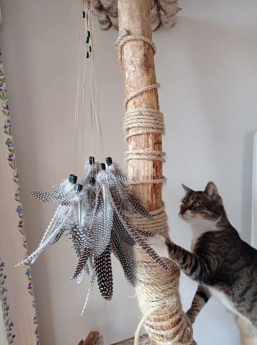 Wędki dla kotów, jaki mają związek z karma dla kota który nie chce jeść