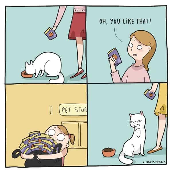 karma dla kota który nie chce jeść istnieje na chwilę