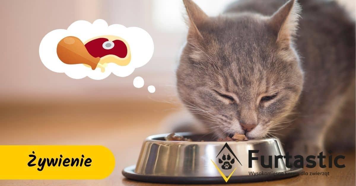 karma dla kota ktory nie chce jesc