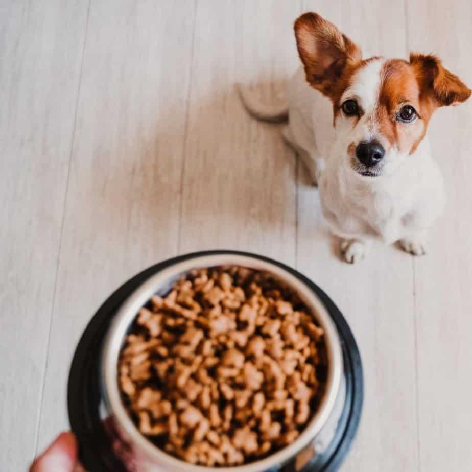 dlaczego sucha karma dla psa jest szkodliwa