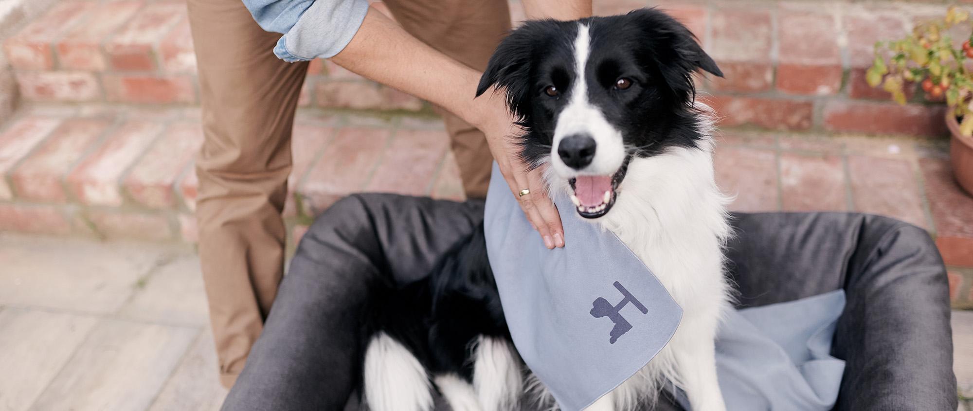 ręcznik dla psa Doro